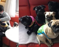 Excuse Me, Did You Know Japan Has A Pug Café?