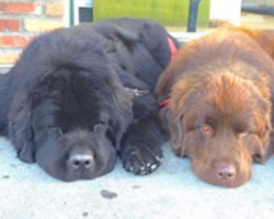 Family thinks they're getting 2 normal dogs, but then they see them in person
