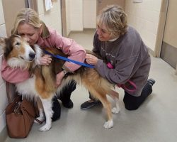 'No One Had Time' For Senior Collie Left At Shelter Except For His Dedicated Rescuers
