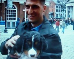 Soldier Surprised By His Wife With The Puppy He Always Wanted