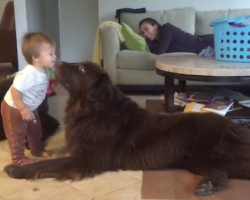 Toddler Leans In For A Kiss From The Dog, Gets A Little More Than He Bargained For