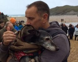 Hundreds Of Well Wishers Join Beloved Dog For His Last Walk On His Favorite Beach