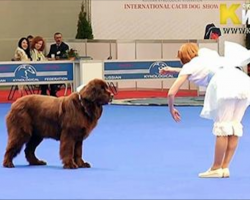 Woman and her dog step onstage, paralyze crowd with an incredible show routine