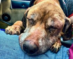 Pilot Flies Old Dog 400 Miles To Get A New Home