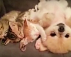 3 Kittens Fall Asleep Beside Puppy. Not Wanting To Wake Them, Dog Comes Up With Plan