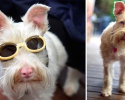 Albino Dog Abandoned As Puppy Wears Sunglasses And Avoids The Sun To Stay Healthy And Happy