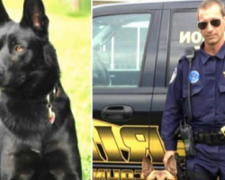 Cop Gets Ambushed By Gang Members. His K-9 Partner Rushes In To Save His Life