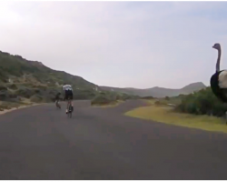 Bicycle Race Takes Hilarious Turn As Ostrich Joins In, And Runs At Over 30 Miles Per Hour