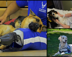 Service Dogs, Therapy Dogs, And Emotional Support Animals– Do you know the difference?