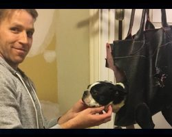Dog Refuses To Have Her Nails Clipped. Dad Invents Contraption, Wins Over The Internet