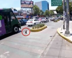 Cyclist risks his life to save a runaway dog as he chases the pooch along busy streets in Mexico City