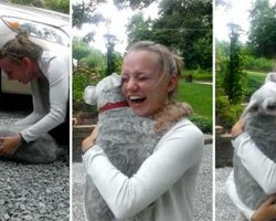 Dog Is So Overwhelmed By Joy When She Sees Her Human Again That She Passes Out