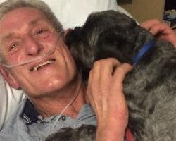 Man Wakes From Coma After His Dog Visits Hospital