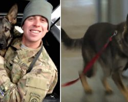 Soldier Anxious If Military K-9 Will Recognize Him After 3 Years Then Suddenly Spots Dog Charging Thru Gate
