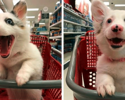 Watch How Excited This Pup Gets – In A Target Store!