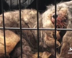 Dog Looks Like Lifeless Ball Of Fur Until She Lifts Her Head For Rescuers