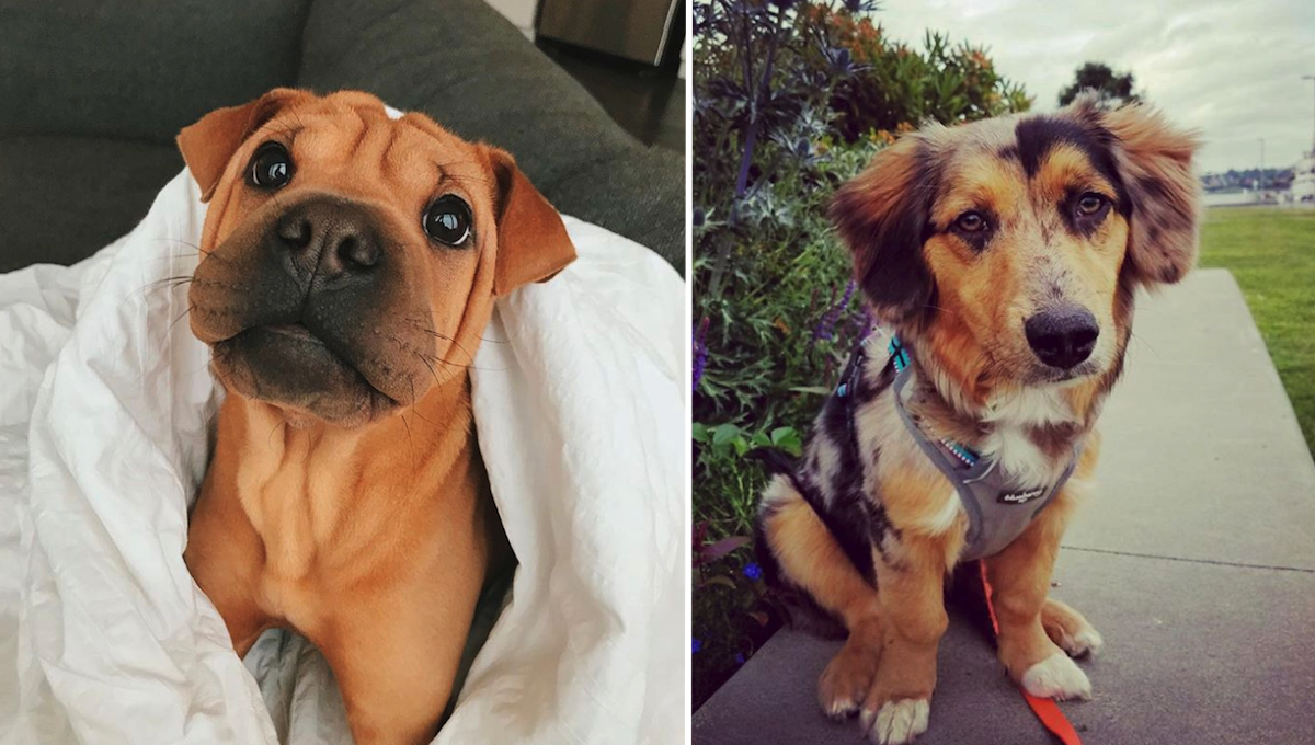 17 Of The Cutest Mixed Breed Pups You
