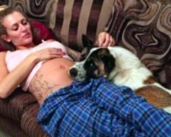 Pregnant Mom's Confused Why Dog Won't Stop Barking, Doesn't Realize He's Trying To Save Her
