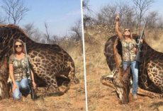 American Hunter Posing With A Dead Rare Black Giraffe She Just Shot