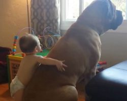 Baby Wraps His Arms Around Giant Bull Mastiff, Gives Him The Sweetest Hug