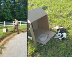 Cop Approaches Box On Side Of The Road And Sees 10-Week-Old Puppy Lying Beside It