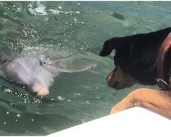 Dog Spots Dolphin Swimming Up To Boat, Begins Game That's Lighting Up The Internet