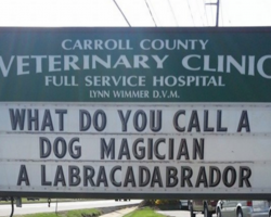 These Hilariously Clever Veterinarian Signs Will Have You In Stitches