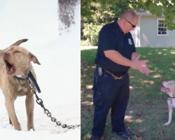 Pit Bull Puppy Chained In The Snow Has Her Cries For Help Answered By A Cop