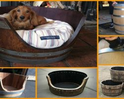 How To Make An Awesome Wine Barrel Dog Bed