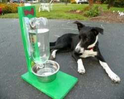 How To Easily Make An Eco-Friendly Water Bowl For Your Dog or Cat