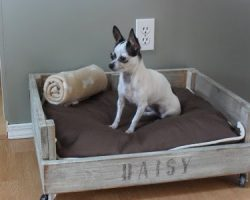 10 Awesome DIY Projects for Dog Lovers