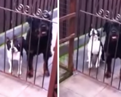 Friendly Dog Literally Says 'Hello' When Greeted At His Gate