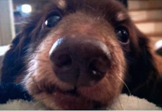 11 Ways Dogs Tell You They Love You