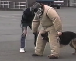 Dog Gets Bored Of His Police Training, Even Makes His Trainer Laugh Out Loud