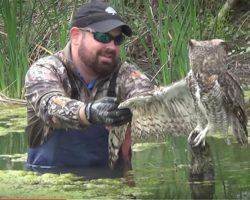 Frightened owl is trapped and can't free itself – now watch its reaction when a guy comes to help
