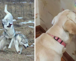 18 Dog Fails That Are So Funny You'll Feel Bad For Laughing