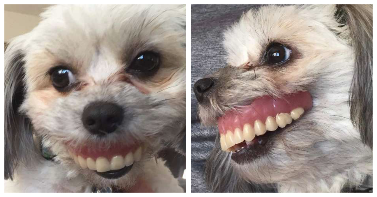 man s dentures go missing then discovers dog sporting a new smile