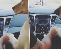 Dog Makes Woman Sit In Back Of Car Then Holds Hands With Her Husband
