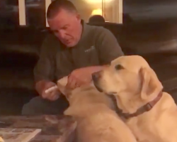 Dog Watches Sister Get Ear Drops, Adorably Thinks He Needs Them Too
