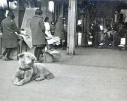 Newly Discovered Photo of The World's Most Loyal Dog Hachiko Shows Him Waiting For His Human