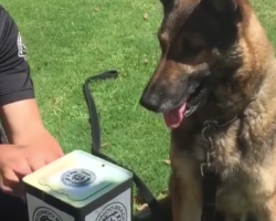 Officer Presents K9 With Jack-In-The-Box, And The Dog Lives Up To His Job Description