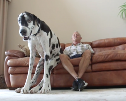 Meet Lizzy, The World's Tallest Female Dog