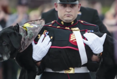 Marine Wanted To Give A Proper Farewell To The Battle Buddy Who Was More Than A Dog