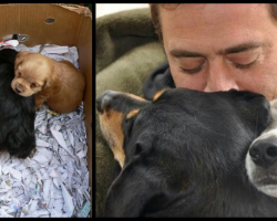 Famous Actor's Approached By Kids Selling Puppies, Chooses The One Who's Barely Alive
