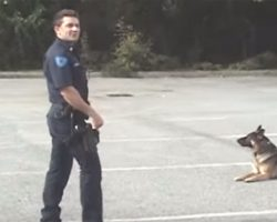 Police dog walks towards the car, 20 seconds later he leaves all the officers in awe