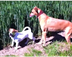 When Farmer Blows Whistle, Dog Launches Into A Routine That Has Viewers Roaring