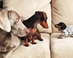 These 2 Dogs Just Got The News About The New Puppy. Their Reactions Are Priceless.