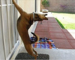 13 pets who hilariously want to be let back inside