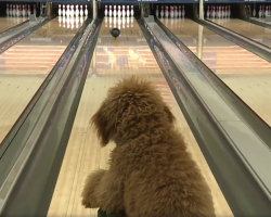 Girl Teaches Her Dog To Bowl, And Now He's A Star At Their Local Bowling Alley