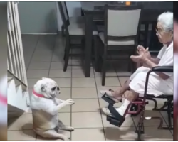 When Grandma Claps And Sings, Her Dog Dances To The Beat